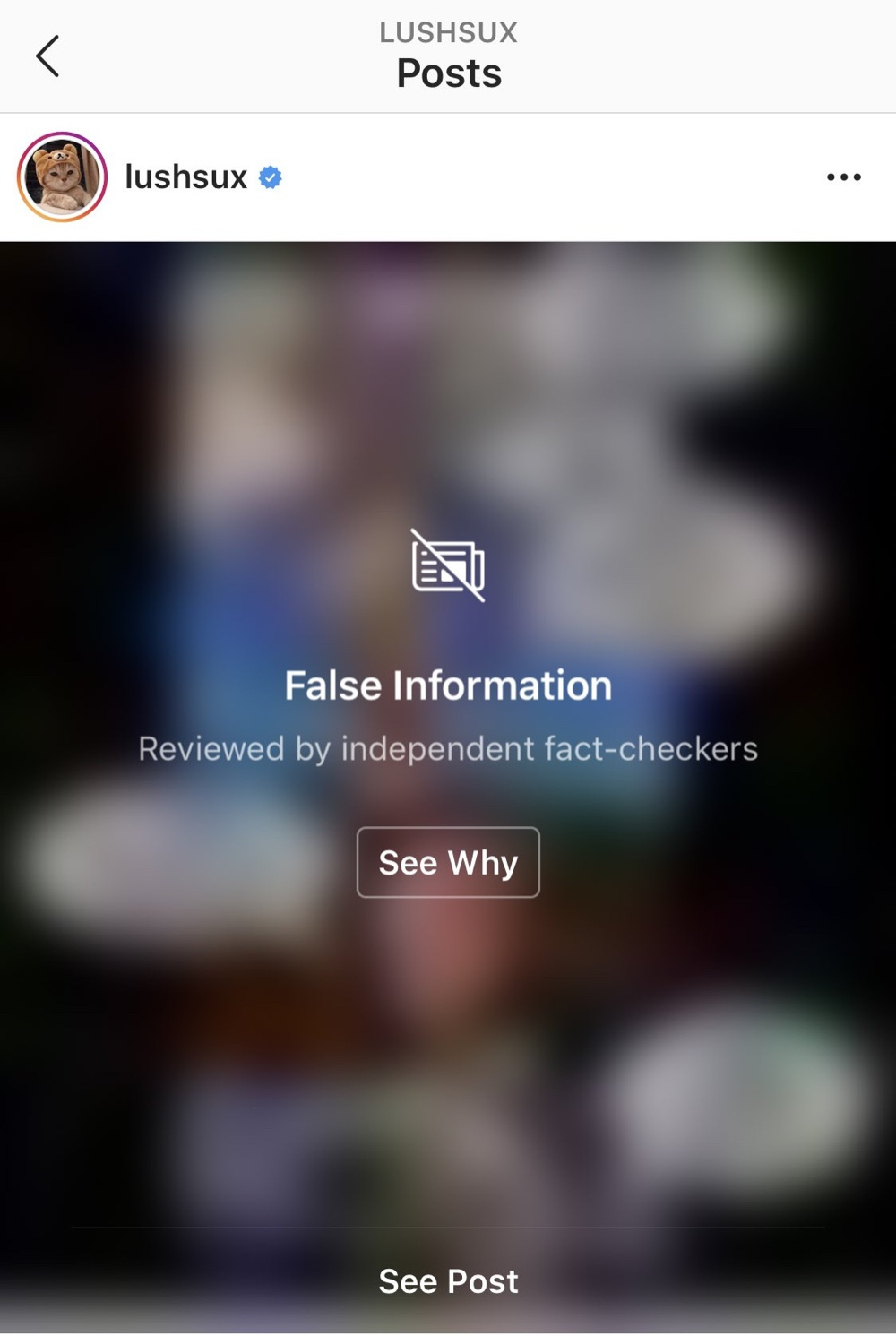 "Instagram memes are being blurred out and hidden behind ""False Information"" notices (Instagram - @lushsux)"